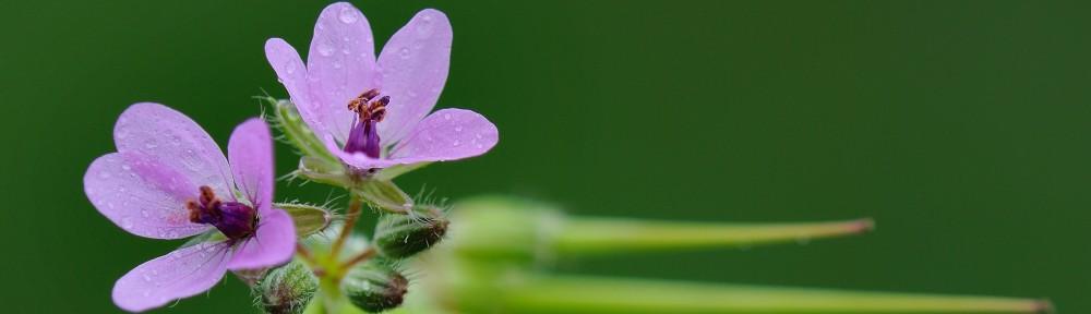 """Regalos de la naturaleza:                                       """" Flores silvestres y mariposas."""""""